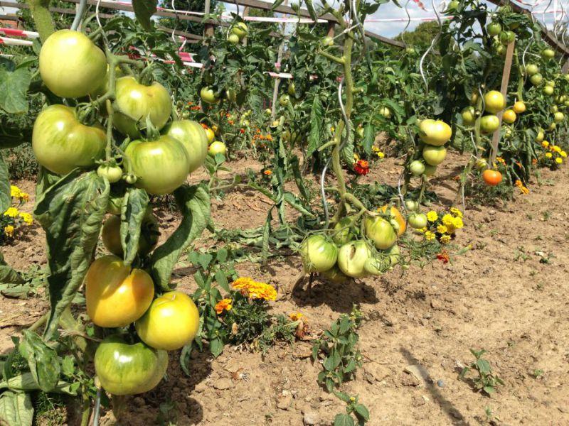 Jardins familiaux quesnoy sur de le site officiel de for Entretien jardin quesnoy sur deule