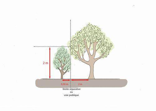 arbres limite propriete