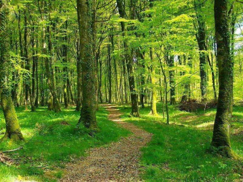 votre environnement forêt de sénart quincy sous sénart site